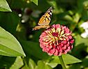 Schmetterlingslandeplatz